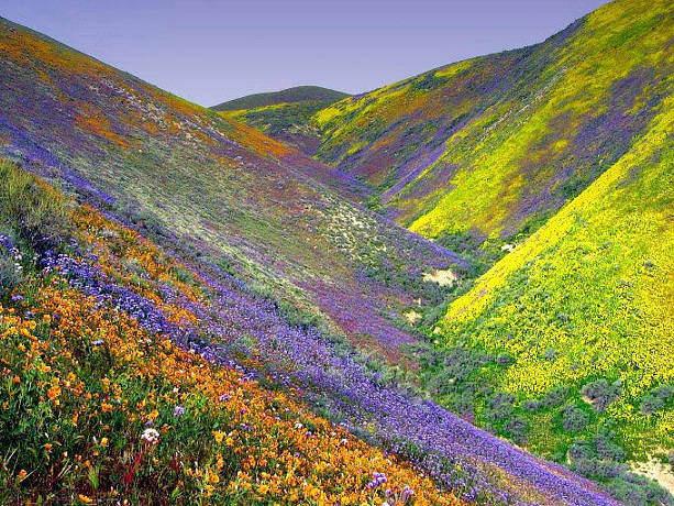 планински цветя