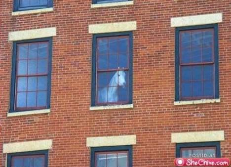 кон в  къщи