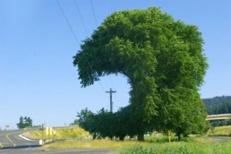 път и дърво