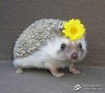 животни и цветя