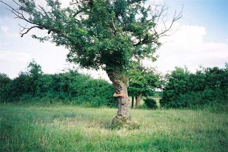 Ако искаш прегръдка, прегърни дърво...