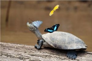 животни и пеперуди
