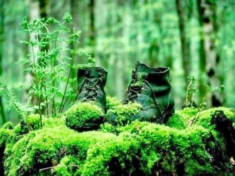 стари обувки в гората
